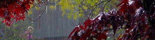 rain_wallpaper-703085